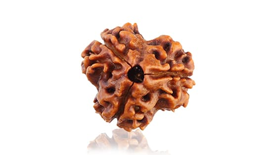 Teen Mukhi  Three Faced Nepali Rudraksha - Lab Certified