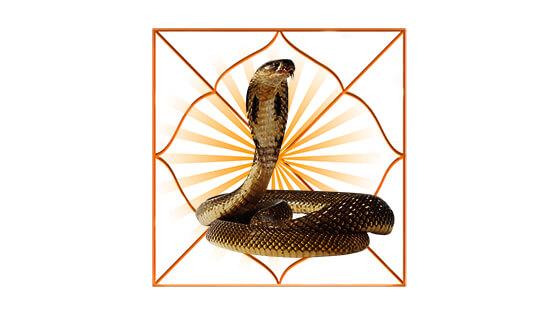 Kaal Sarp Dosha Puja