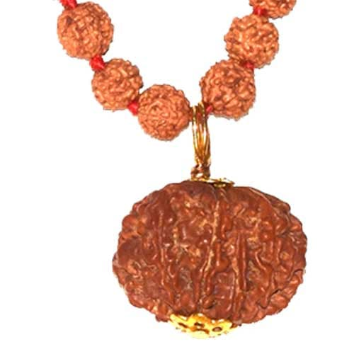 Aath Mukhi/ Eight Faced Rudraksha - Lab Certified
