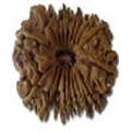 Athara Mukhi/ 18 Faced Rudraksha - Lab Certified