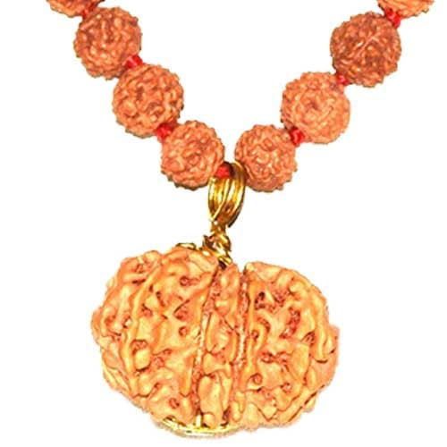 Baarah Mukhi/Twelve Faced Rudraksha - Lab Certified