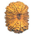 Bees Mukhi / 20 Faced Rudraksha - Lab Certified