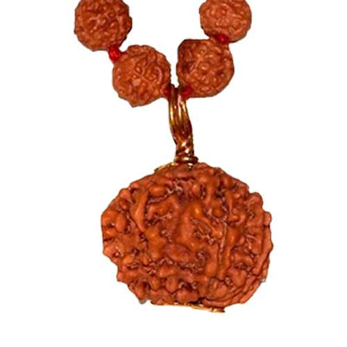 Chhah Mukhi/ Six Faced Rudraksha - Lab Certified