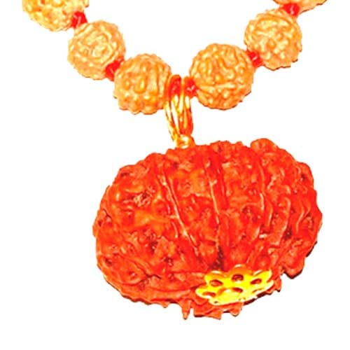 Dus Mukhi / Ten Faced Rudraksha - Lab Certified