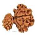 Gauri Ganesha Rudraksha - Lab Certified