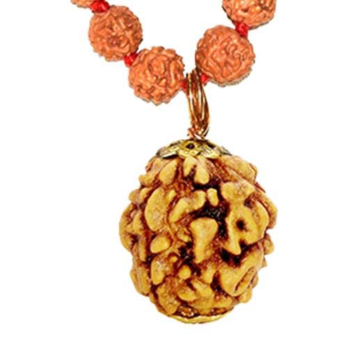 Teen Mukhi / Three Faced Rudraksha - Lab Certified