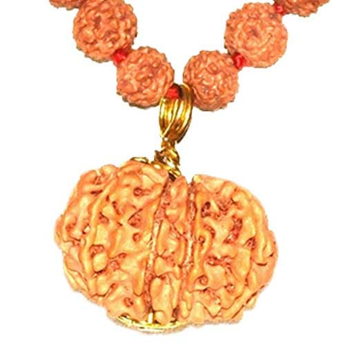 Terah Mukhi/ Thirteen Faced Rudraksha - Lab Certified
