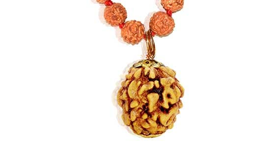 Chaar Mukhi/ Four faced  Rudraksha - Lab Certified