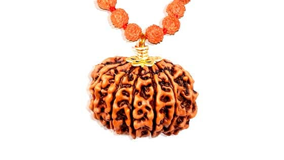Gyara Mukhi / Eleven Faced Rudraksha - Lab Certified