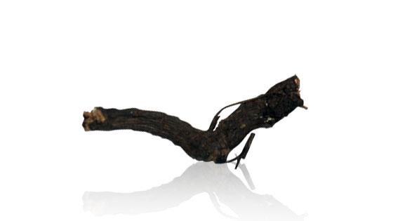 Nagarmotha Root - Nagarmotha Jad